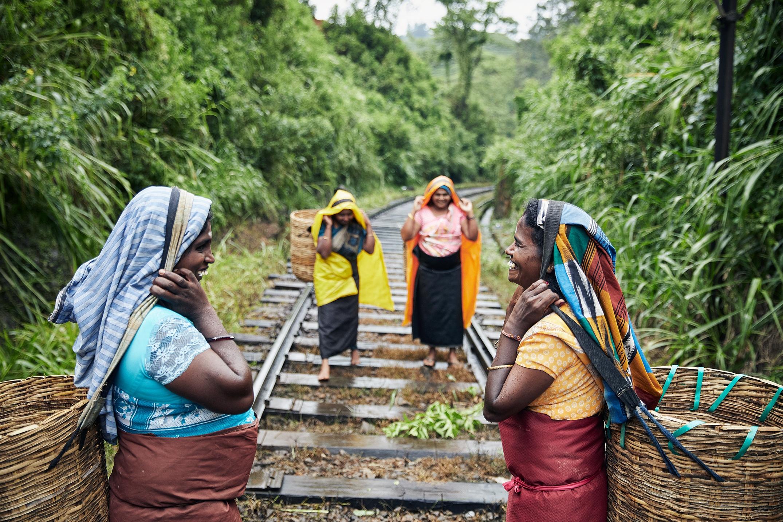 Sri Lanka - Tea Pluckers