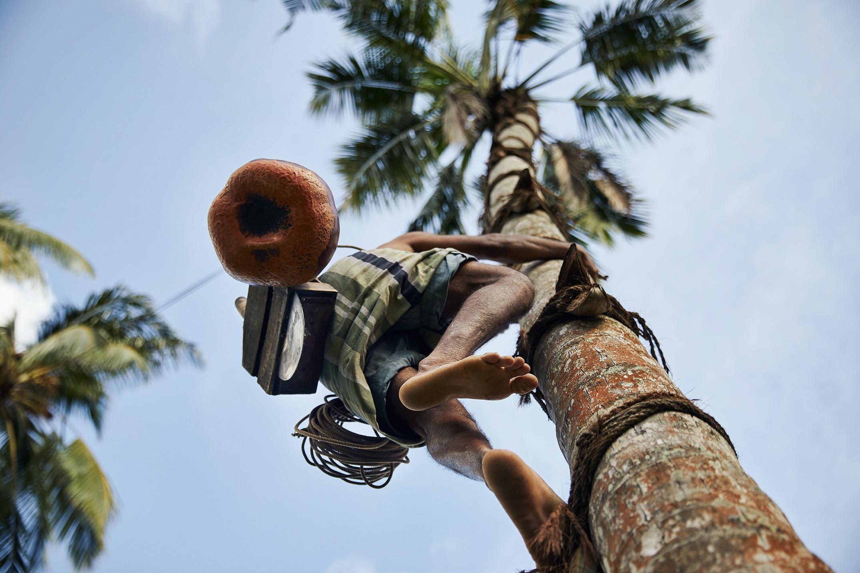 Sri Lanka - Toddy Tapper-1