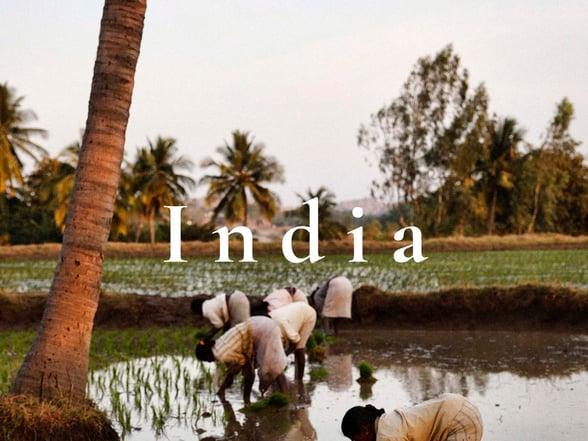 Surrounded - India - Revitalise