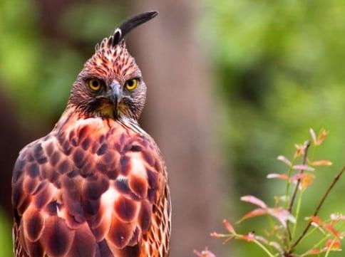 birding reni pani
